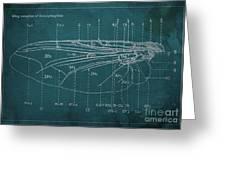 Flesh Fly Wing Blueprint Green Greeting Card