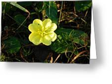 Fleur Jaune Couverte De Rosee Greeting Card