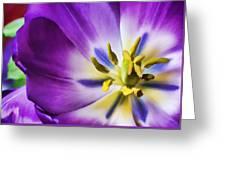 Fleur Viii Greeting Card