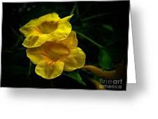 Fleurs Jaunes Greeting Card