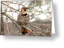 Flicker - Alabama State Bird - Attention Greeting Card