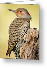Flicker Greeting Card