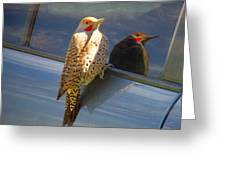Yellow Shafted Northern Flicker Hanging Around Greeting Card