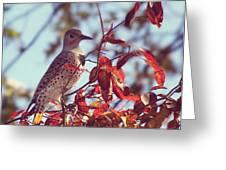 Flicker In Autumn Greeting Card