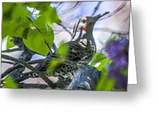 Flicker In The Lilacs Greeting Card