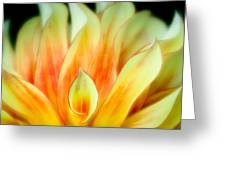 Flickering Petals Greeting Card