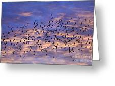 Flight Of The Blackbirds Greeting Card