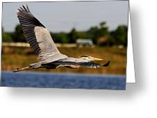 Flight Of The Great Blue Heron Greeting Card