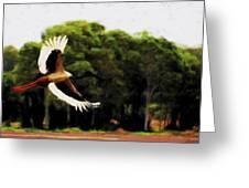Flight Of The Jabiru V2 Greeting Card
