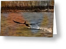 Flight Of The Pelican-featured In Wildlife-newbies And Comfortable Art Groups Greeting Card