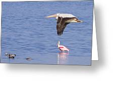 Flight Of The Pelican Greeting Card