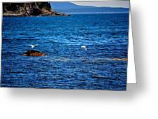 Flight Of The Seagulls Greeting Card