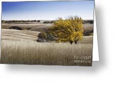 Flint Hills Autumn 013 Greeting Card