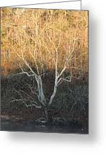 Flint River 12 Greeting Card