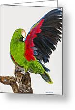 Flirting Parrot By Barbara Heinrichs Greeting Card