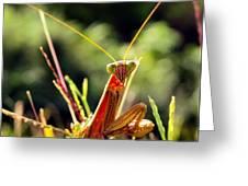 Flirty Mantis Greeting Card