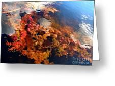 Floating Algae Greeting Card