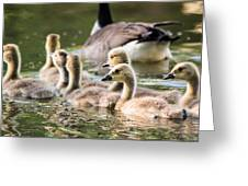 Floating Along The Pond Greeting Card