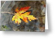 Floating Autumn Leaf Greeting Card