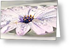 Floating Daisy Greeting Card