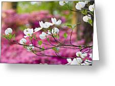 Floating Dogwood Greeting Card