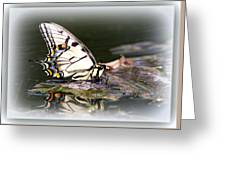 Floating In Water - Swallowtail -butterfly Greeting Card