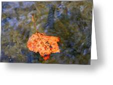 Floating Leaf Greeting Card by Paula Tohline Calhoun