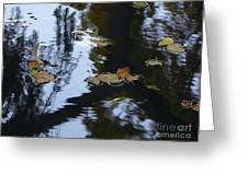 Floating Leaves Greeting Card