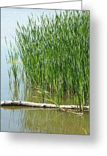 Floating Log In A Marsh Greeting Card
