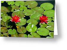 Floating Red Water Lilly Flowers On Pond Greeting Card