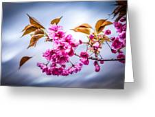 Floating To Earth Greeting Card