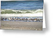 Flock And Wave Greeting Card