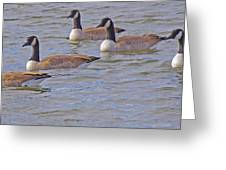 Flock Of Five Greeting Card