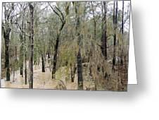 Flooding Dry Creek Greeting Card