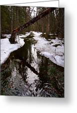 Flooding Forest Greeting Card