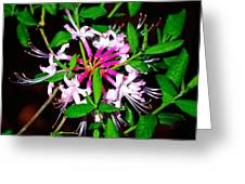 Flora In Pink Greeting Card