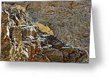 Flora In Sunlight In Big Painted Canyon Trail In Mecca Hills-ca Greeting Card
