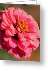 Flora Greeting Card by Rhonda Humphreys