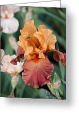 Floral 12 Greeting Card