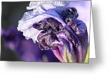 Floral 19 Greeting Card