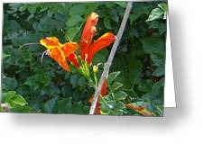 Floral 3 Greeting Card