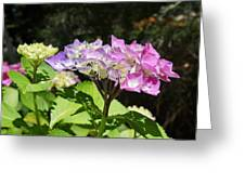 Floral Art Photography Pink Lavender Hydrangeas Greeting Card