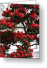 Floral Bonsai Greeting Card