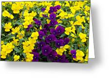 Floral Cascade Greeting Card