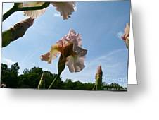 Floral Clouds Greeting Card