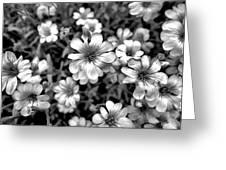 Floral Drama Greeting Card