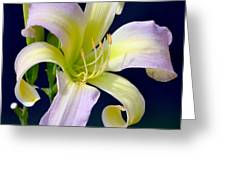 Floral Fanfare Greeting Card
