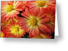 Floral Frenzy 2 Greeting Card