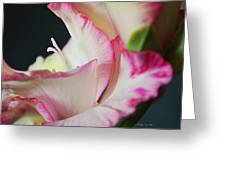 Floral Geometry Greeting Card