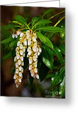 Floral Hanging Lanterns From Japan Greeting Card